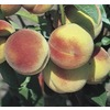  3.84-Gallon Hale Haven Peach (L3225)