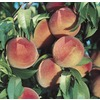  3.84-Gallon Reliance Peach (L4552)
