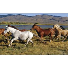 Environmental Graphics Wild Horses Wall Mural