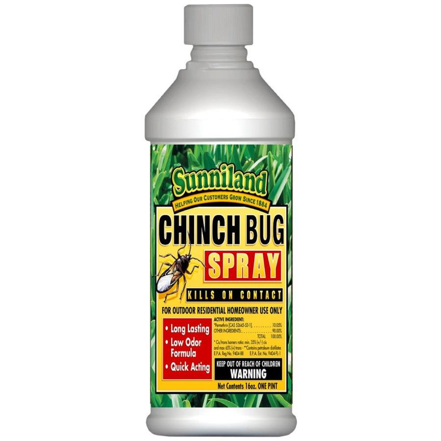 Best Bed Bug Spray Lowes