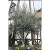 10.25-Gallon European Olive (L14921)