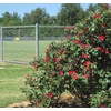 2-3/8-in x 8-ft 16-Gauge Galvanized Steel Chain-Link Fence Terminal Post