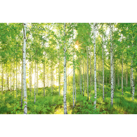 Shop brewster wallcovering birch tree mural at for Brewster birch wall mural