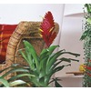 14-Ounce Bromeliads (L20921hp)