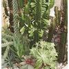 3.8-Quart Mixed Cacti and Succulents (LWALTCS)