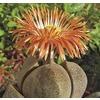 4-oz Mimicry Plant (L25724)