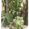  1-Count Mixed Cacti & Succulents (LWALTCS)