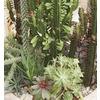 1-Pint Mixed Cacti & Succulents (LWALTCS)