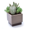 1.2-Quart Mixed Cacti (AL001)