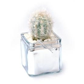 1.3-Pint Mixed Cacti (AL001)