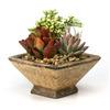 15 oz Mixed Cacti (AL001)