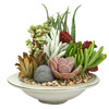 1.8-Pint Mixed Cacti (AL001)