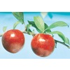  3.25-Gallon Ozark Premier Plum (L1346)