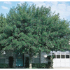  3.25-Gallon Arizona Ash (L3496)