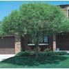 8.75-Gallon Globe Willow (L1412)