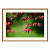 Amanti Art 35.04-in W x 25.04-in H Nature Framed Wall Art