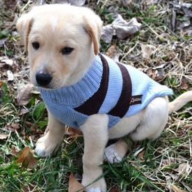 ABO Gear Brown Wool Unisex Sweater