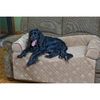 Snoozer Microfiber Rectangular Dog Bed