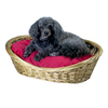 Snoozer Medium Blue Polyester/Cotton Oval Dog Bed