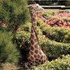 Design Toscano Gigi The Garden Giraffe 43.5-in Garden Statue