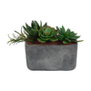 Laura Ashley by Vintage Home 7-in Green Succulents