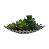 Laura Ashley by Vintage Home 6.5-in Green Succulents