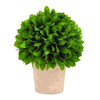UMA Enterprises 10-in Vibrant Green Ball-Shaped Plant