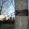 Vivere Set of 2 Black Hammock Tree Straps