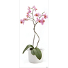 allen + roth Orchid Snap Wall Art