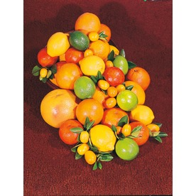 4.5-Quart Citrus Cocktail Tree (L6805)