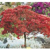1.25-Quart Mixed Tree Azalea (L7297)