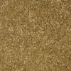 Savvy Comfort Warm Buff Textured Indoor Carpet