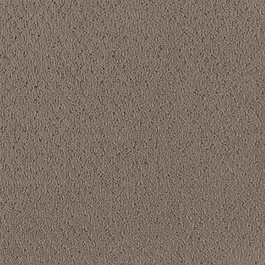 Image Result For Carpet Cleaner Rental Prices