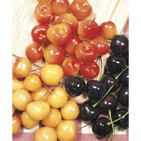  5.5-Gallon 3-N-1 Cherry (L10542)