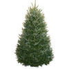 5-6-ft Fresh Fraser Fir Christmas Tree