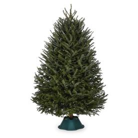  7-ft to 8-ft Fresh-Cut Fraser Fir Christmas Tree