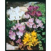 Garden State Bulb 20-Pack Crocus