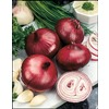 Garden State Bulb 50-Pack Red Baron Onion Plant (LB21811)