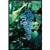 Garden State Bulb Mars Seedless Grape (L1319)