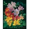 Garden State Bulb 10-Pack Freesia