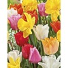 Garden State Bulb 40-Pack Tulip and Daffodil Collection Bulbs