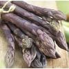 Garden State Bulb 5-Count Purple Passion Asparagus Bulbs