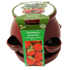 Buzzy Strawberry Pot - Red