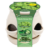 Buzzy Herb Gardening Kit