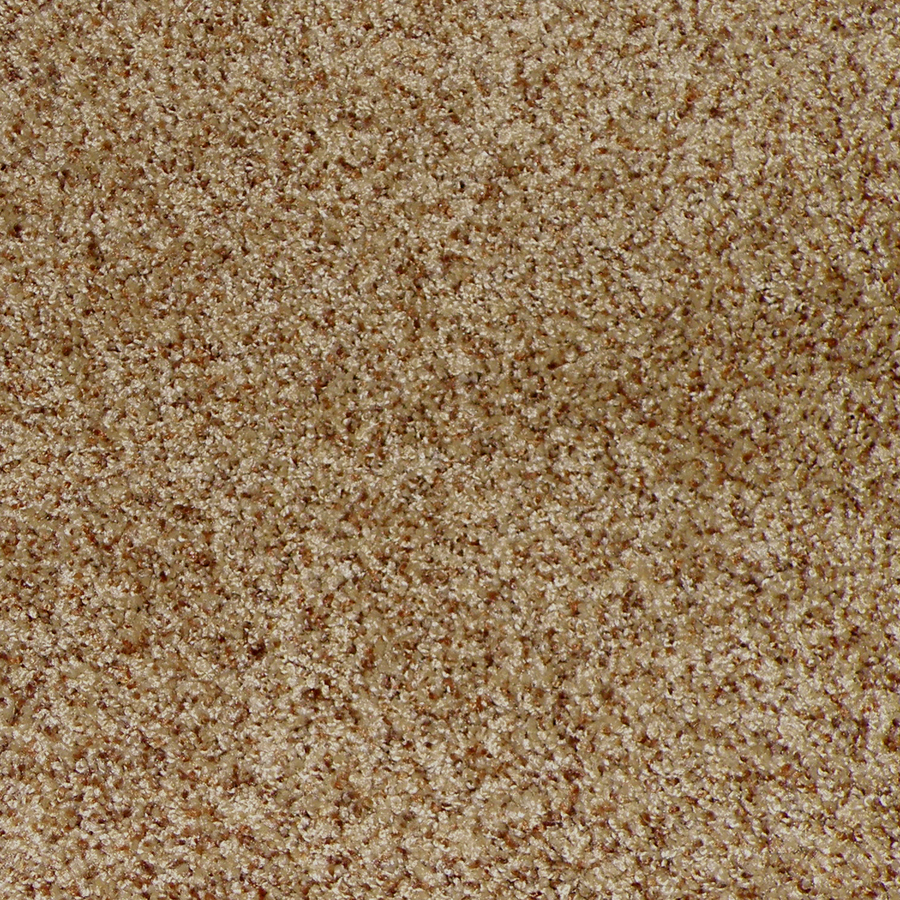 Shop stainmaster stanfield truffle cut pile indoor carpet for Stainmaster carpet