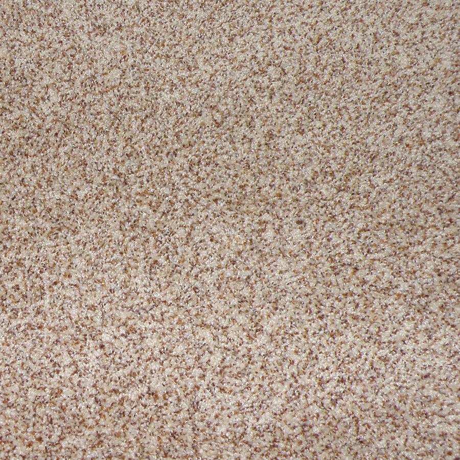 Shop Stainmaster Weddington Toast Cut Pile Indoor Carpet