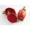 1.72-Gallon Dragon Fruit (Red Flesh) Small Fruit (L21823)