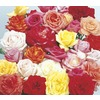  2.5-Quart Rose (L6023)