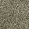 Coronet Active Family Exhilarated Spurlock Textured Indoor Carpet