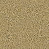 Coronet Elgin Spicewood Frieze Indoor Carpet